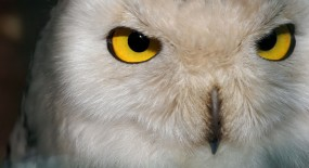 Sixth Sense: Does Instinct Play a Vital Role in Business?